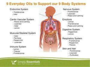 9-oils-for-9-body-systems